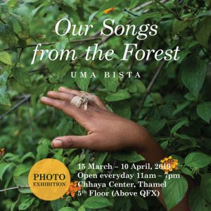 Our Songs from the Forest